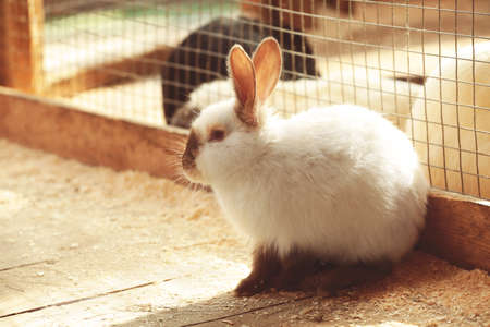 Cute funny rabbit in zoological garden