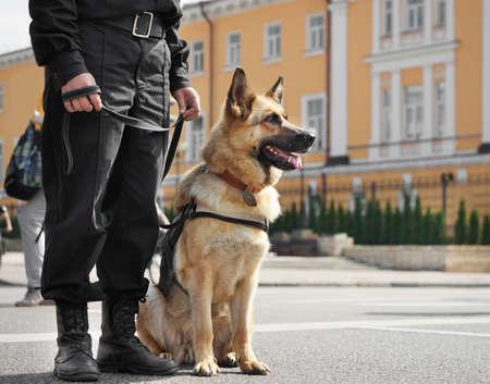 Photo pour Smart police dog sitting outdoors - image libre de droit