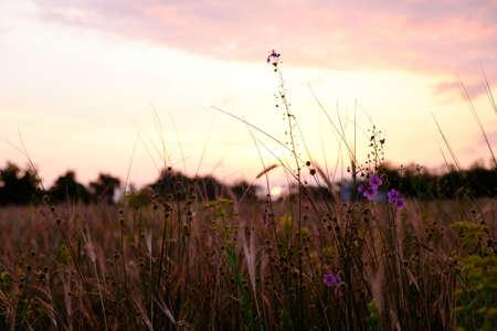 Beautiful meadow with wild flowers in twilight