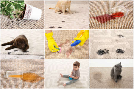 Photo for Set with different types of dirt on carpets. Cleaning concept - Royalty Free Image