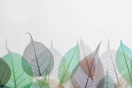 Beautiful decorative skeleton leaves and space for text on white background, top view