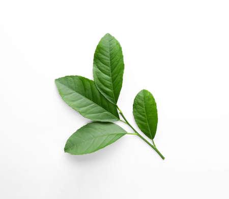 Photo pour Fresh twig with green citrus leaves on white background, top view - image libre de droit