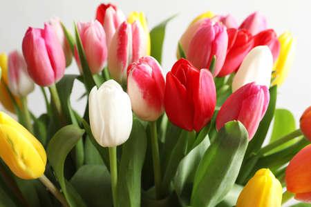 Photo pour Beautiful bouquet of bright tulip flowers on light background, closeup - image libre de droit