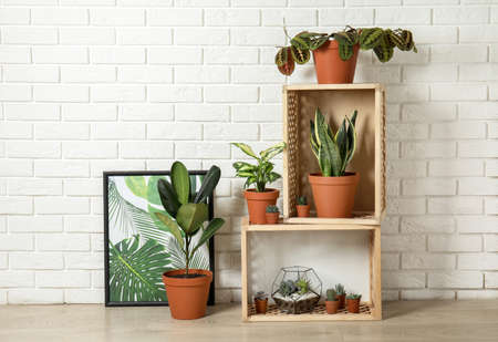 Photo for Potted home plants and wooden crates on floor indoors. Idea for interior decor - Royalty Free Image