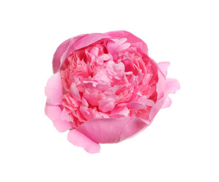 Foto de Beautiful fresh peony flower on white background, top view - Imagen libre de derechos