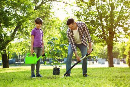Foto de Dad and son planting tree together in park on sunny day - Imagen libre de derechos
