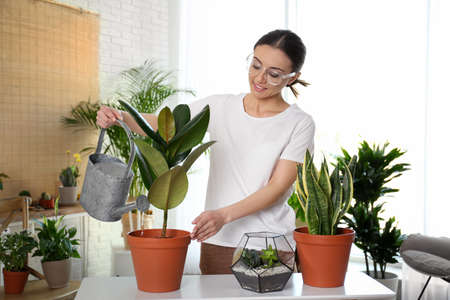 Photo for Young woman watering potted plant at home - Royalty Free Image