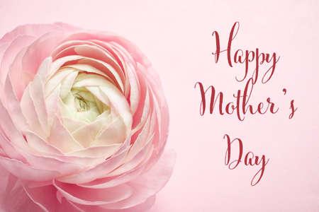 Foto de Beautiful ranunculus flower and text Happy Mother's Day on pink background - Imagen libre de derechos
