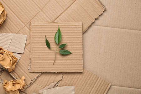 Photo pour Green leaves and crumpled paper on carton, top view with space for text - image libre de droit