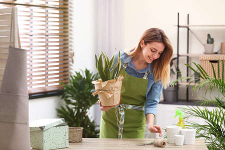 Foto de Young woman taking care of houseplant indoors. Interior element - Imagen libre de derechos