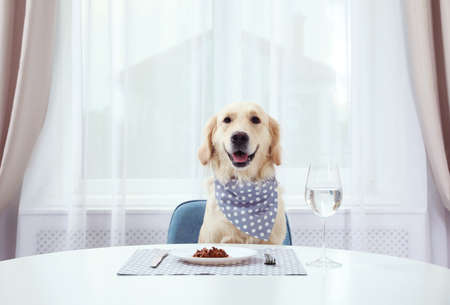 Photo for Cute funny dog sitting at served dining table indoors - Royalty Free Image
