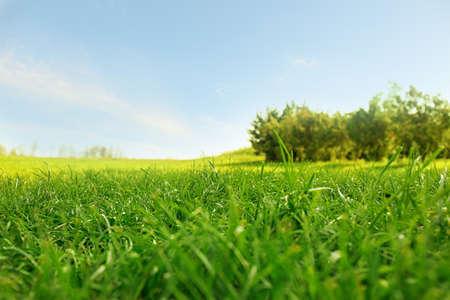 Photo pour Picturesque landscape with beautiful green lawn on sunny day - image libre de droit