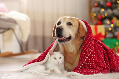 Photo pour Adorable dog and cat together under blanket at room decorated for Christmas. Cute pets - image libre de droit
