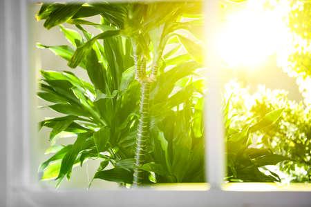 Photo pour Beautiful view through window on garden in morning - image libre de droit