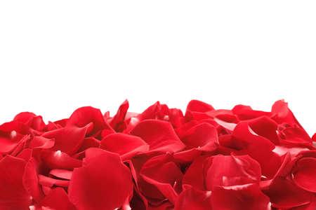 Photo pour Pile of red rose petals on white background - image libre de droit