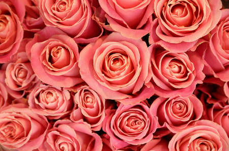 Photo for Beautiful pink roses as background, top view. Floral decor - Royalty Free Image