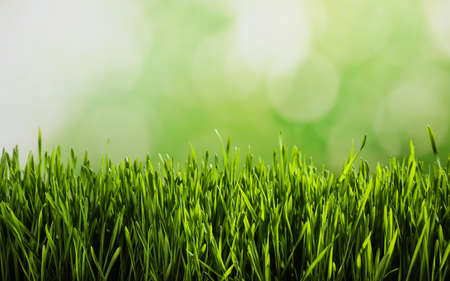 Photo pour Fresh spring grass on blurred background, space for text - image libre de droit