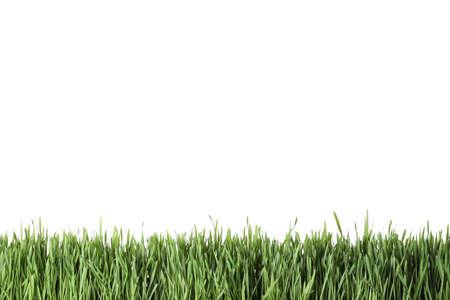Photo pour Fresh green grass on white background. Spring season - image libre de droit