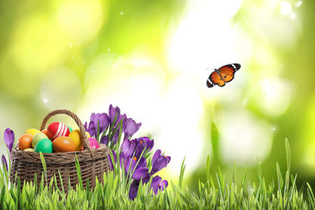 Photo for Wicker basket with Easter eggs near flowers in green grass and butterfly on blurred background - Royalty Free Image