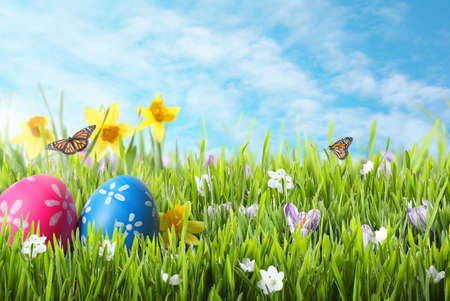 Photo pour Bright Easter eggs in green grass and butterflies against blue sky - image libre de droit