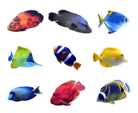 Photo pour Set of different bright tropical fishes on white background - image libre de droit