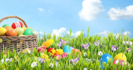 Photo for Wicker basket with Easter eggs in green grass against blue sky, space for text. Banner design - Royalty Free Image