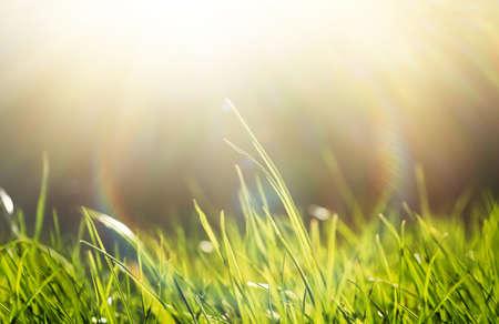 Foto de Lush green grass on sunny day, closeup - Imagen libre de derechos
