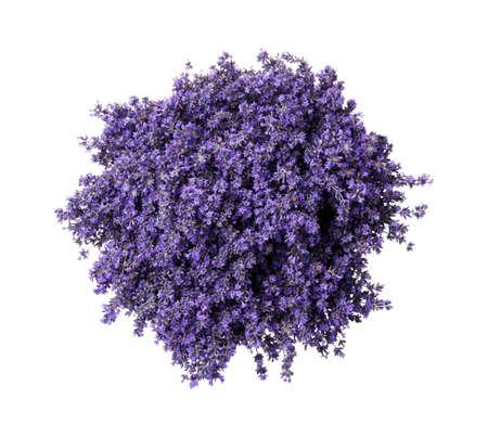 Photo pour Beautiful lavender bouquet isolated on white, top view - image libre de droit