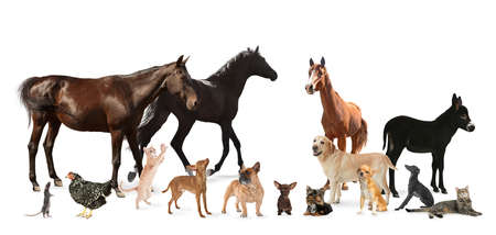 Photo pour Collage with horses and other pets on white background. Banner design - image libre de droit