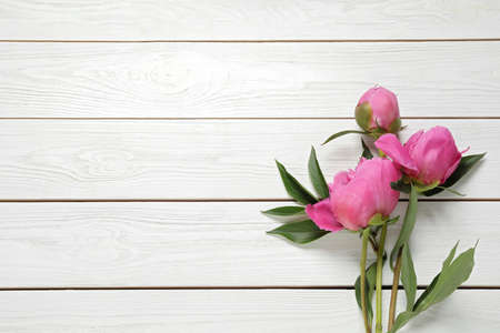 Photo for Beautiful pink peonies on white wooden background, flat lay. Space for text - Royalty Free Image
