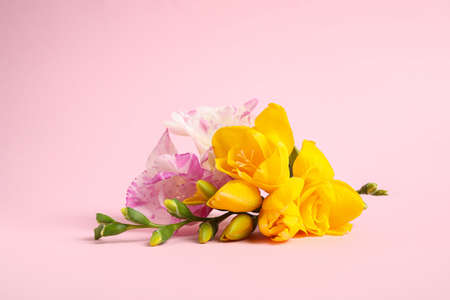 Photo pour Beautiful blooming freesia flowers on pink background - image libre de droit