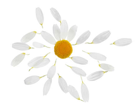 Photo for Chamomile flower with flying petals on white background - Royalty Free Image