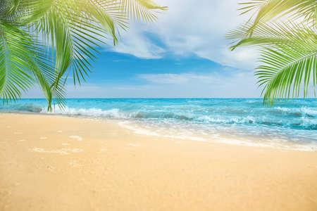 Sandy beach with palms near ocean on sunny day