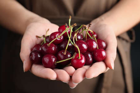 Photo for Woman holding sweet juicy cherries, closeup view - Royalty Free Image