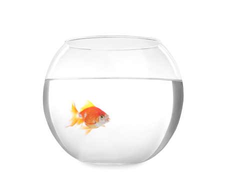 Photo pour Beautiful bright small goldfish in round glass aquarium isolated on white - image libre de droit
