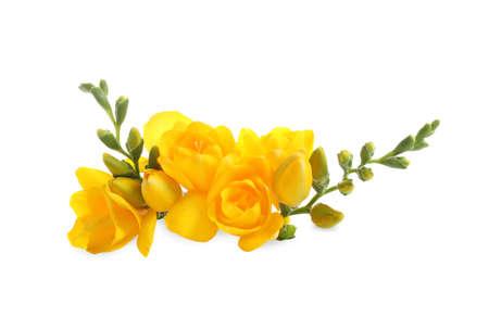 Photo pour Beautiful yellow freesia flowers on white background - image libre de droit