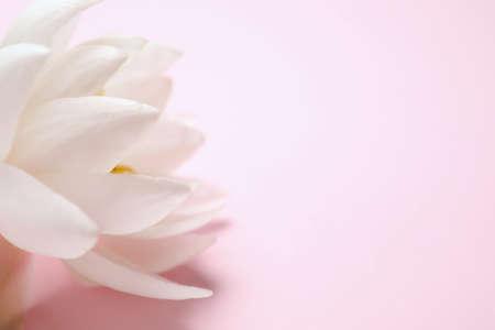Photo pour Beautiful white lotus flower on light pink background, closeup. Space for text - image libre de droit