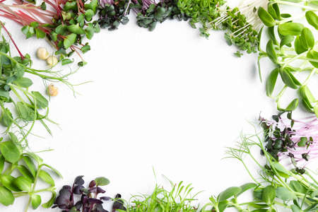 Photo for Frame made with different microgreens on white table, flat lay. Space for text - Royalty Free Image