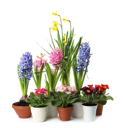 Photo for Different beautiful potted flowers on white background - Royalty Free Image