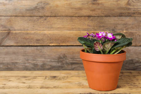 Photo for Beautiful blooming violet flower in pot on wooden table, space for text - Royalty Free Image