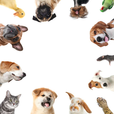 Photo for Cute different animals on white background, collage - Royalty Free Image