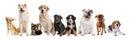 Photo pour Group of different cute dogs on white background. Banner design - image libre de droit