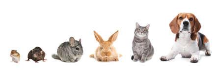 Photo pour Group of different domestic animals on white background, collage. Banner design - image libre de droit
