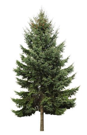Photo pour Beautiful evergreen fir tree on white background - image libre de droit