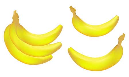 Vector realistic bananas
