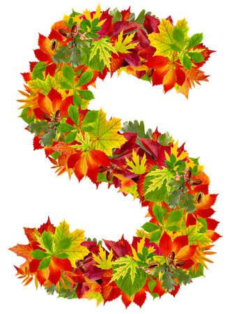 S, autumn alphabet isolated on white