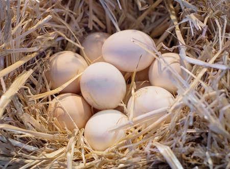 Nest with chicken eggs in  La Boqueria  in Barcelona, Spain.