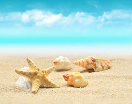 Photo pour Summer beach. Starfish and seashell on the sand. - image libre de droit