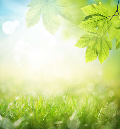 Photo pour Background of green leaves and grass, summer or spring season. Background natural green plants landscape, ecology. - image libre de droit
