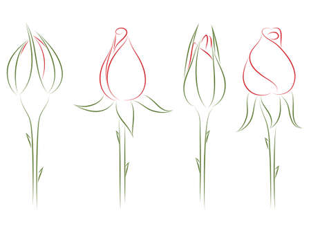 Four drawing buds of roses.